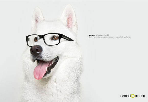 Nearsightedness Dog
