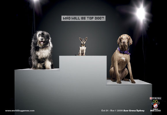 Podium of Dogs