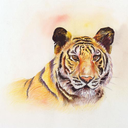 Color Pencil Shading by aditipagez