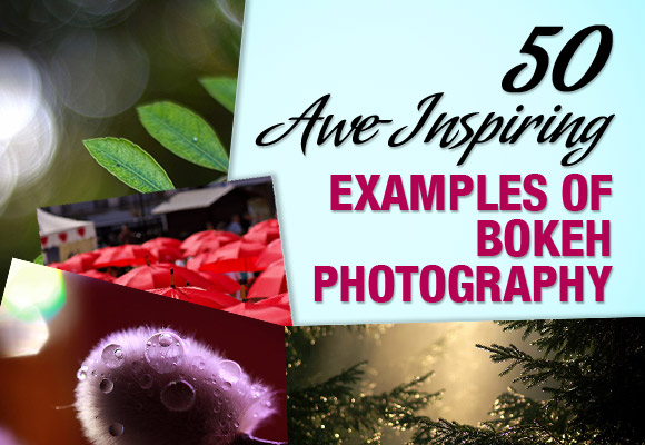 50 Awe-Inspiring Examples of Bokeh Photography
