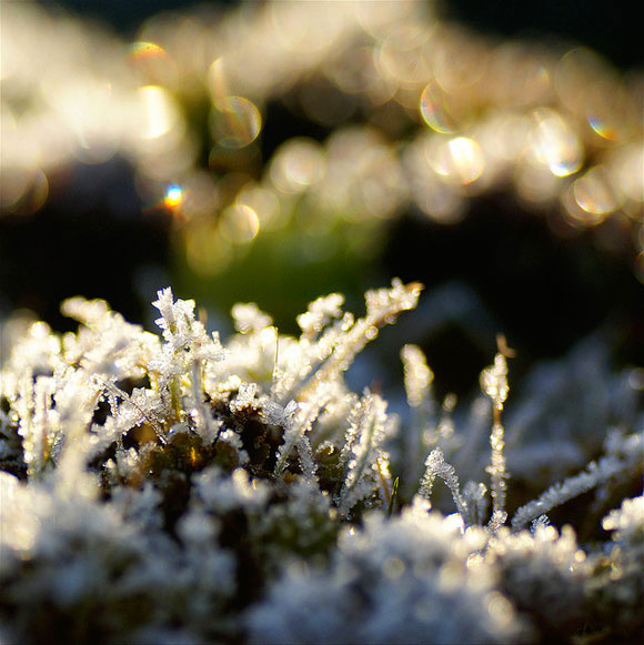 Dutch Winter Bokeh