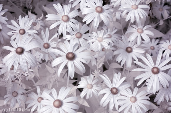 Infrared Macro of flowers