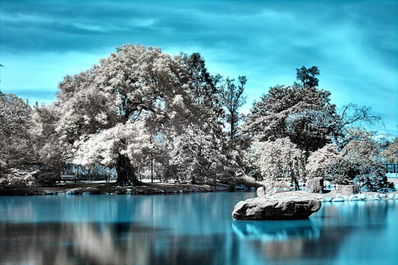 The Japanese Garden in Infrared