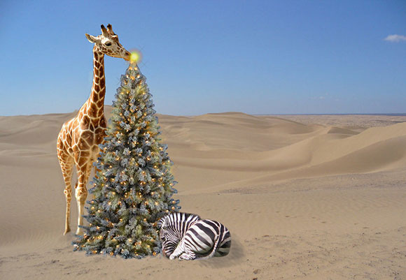 Safari Christmas