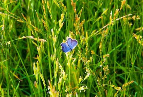 Butterly In A Grass