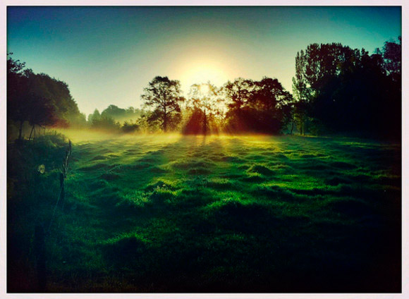 Sun Streaming in Foggy Field