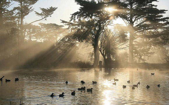 Crepuscular Rays in Golden Gate Park