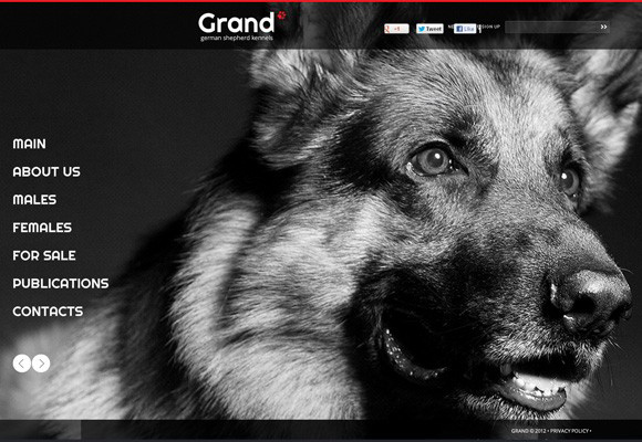Kennel Flash Template