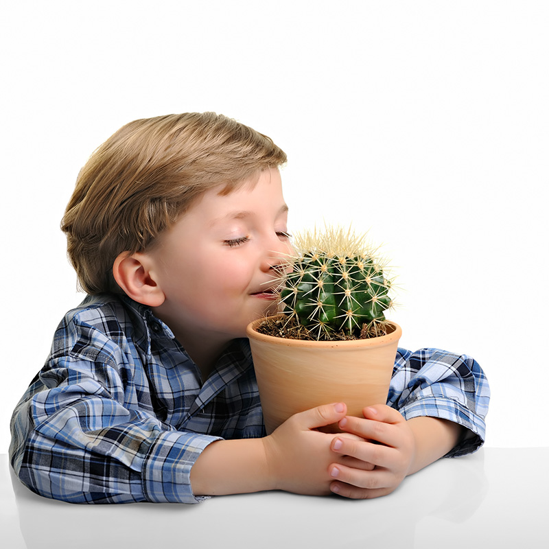 Little Boy Hugging His Houseplant Cactus